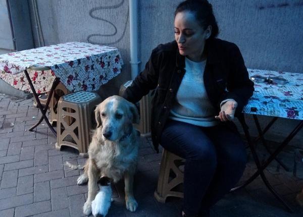 Annesinin dışladığı yavru kediyi, 'Tarçın' köpek sahiplendi -6