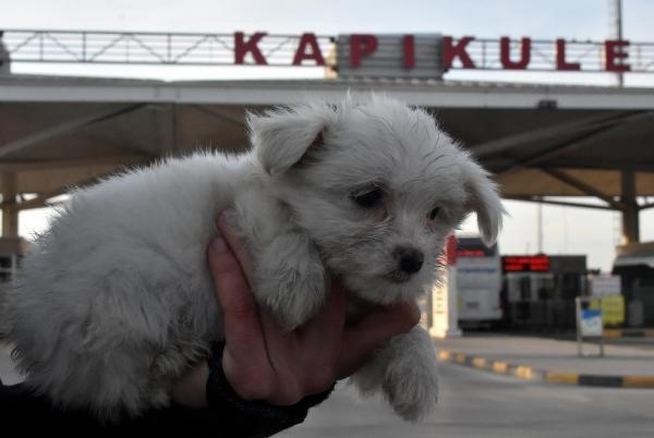Kapıkule'de 14 yavru köpek ele geçirildi -9