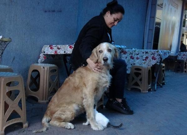 Annesinin dışladığı yavru kediyi, 'Tarçın' köpek sahiplendi -3