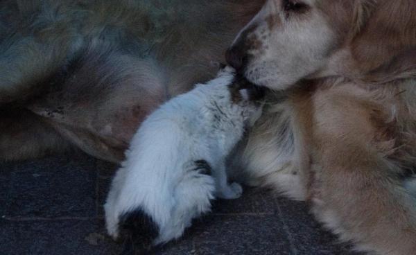 Annesinin dışladığı yavru kediyi, 'Tarçın' köpek sahiplendi -4