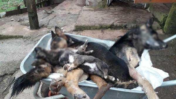 Bartın'da 6 köpek ölü bulundu -6