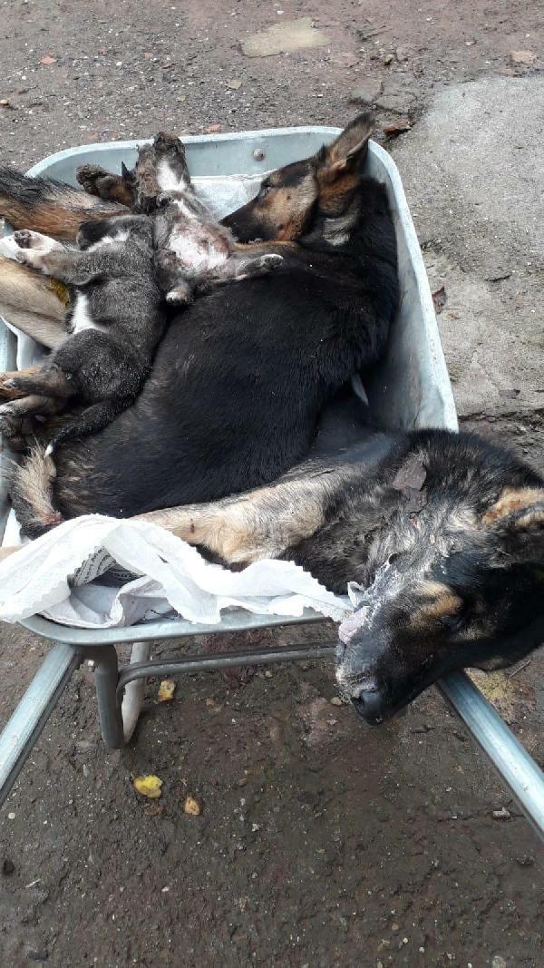Bartın'da 6 köpek ölü bulundu -1
