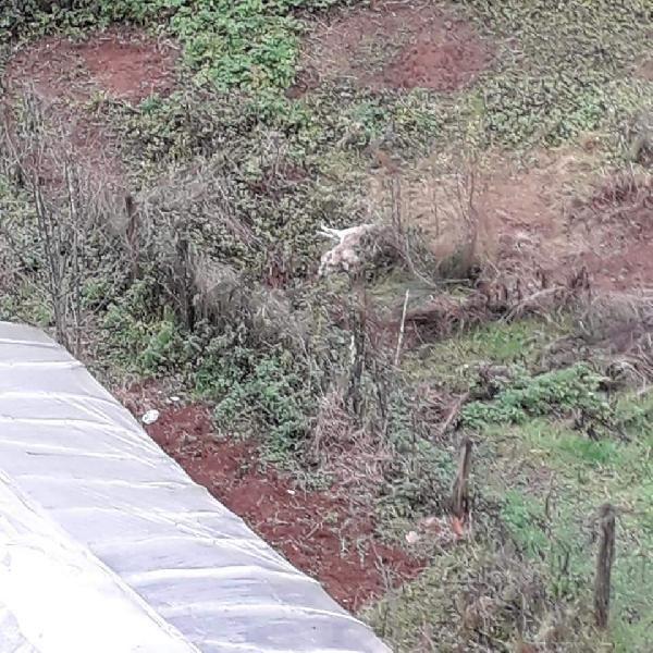 Bartın'da 6 köpek ölü bulundu -4