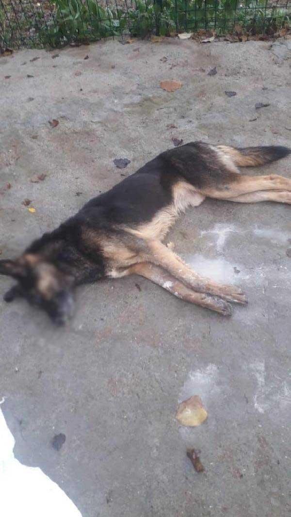 Bartın'da 6 köpek ölü bulundu -8