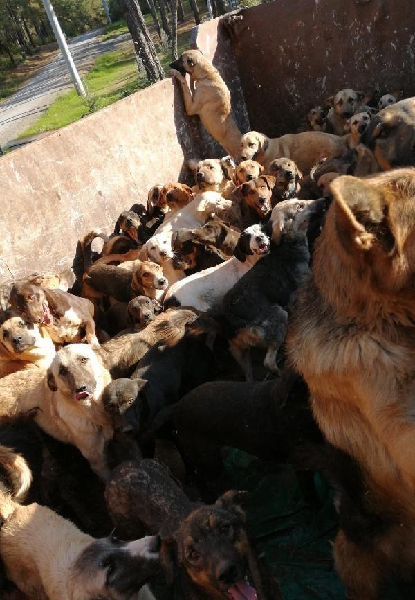 Kamyonla Mersin'e getirilen köpekler, Alanya'ya geri gönderildi -8