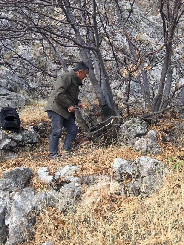 10 yıl önce görülen dağ keçilerine fotokapanlı koruma -2