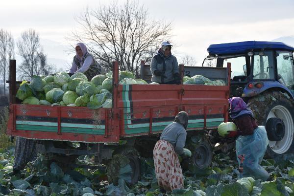 Lahana fiyatı üreticiden tüketiciye gidene kadar 4 kat artıyor -5