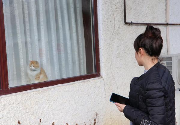 Natalia'nın kedilerini zehirlediler -8