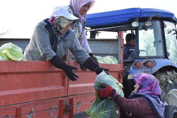 Lahana fiyatı üreticiden tüketiciye gidene kadar 4 kat artıyor -7