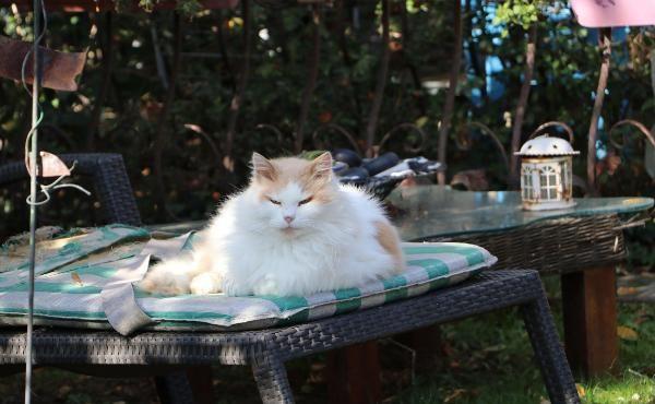 Natalia'nın kedilerini zehirlediler -5
