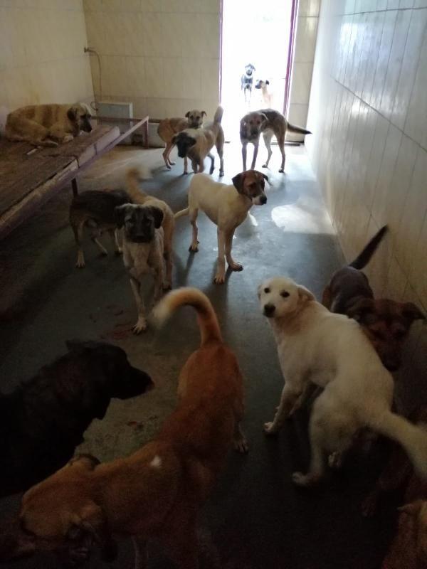 Kamyonla Mersin'e getirilen köpekler, Alanya'ya geri gönderildi -6