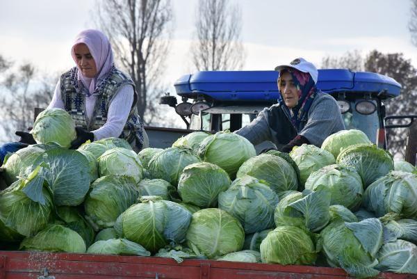 Lahana fiyatı üreticiden tüketiciye gidene kadar 4 kat artıyor -6