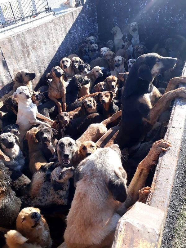 Kamyonla Mersin'e getirilen köpekler, Alanya'ya geri gönderildi -3