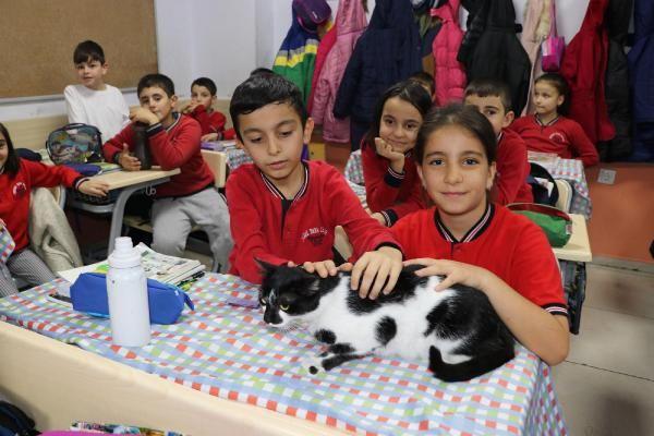 Müdürün sahiplendiği kedi, öğrencilerin neşesi oldu -1