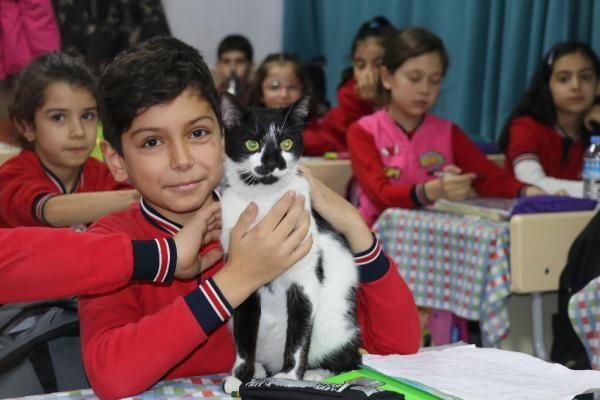 Müdürün sahiplendiği kedi, öğrencilerin neşesi oldu -6