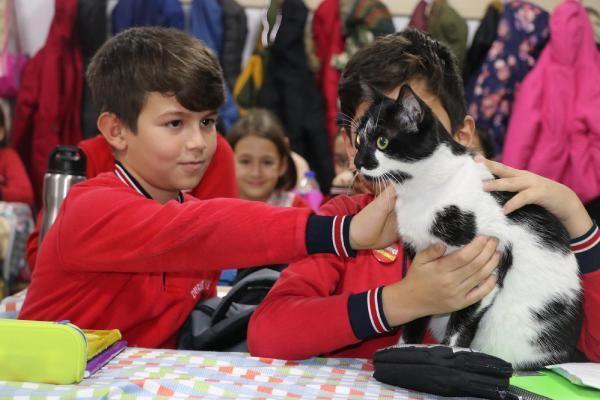Müdürün sahiplendiği kedi, öğrencilerin neşesi oldu -7