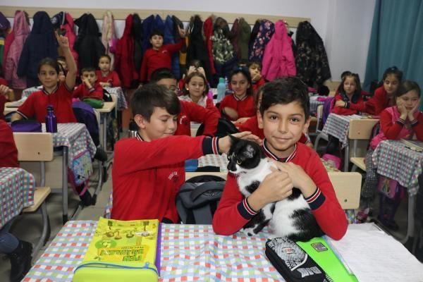 Müdürün sahiplendiği kedi, öğrencilerin neşesi oldu -9