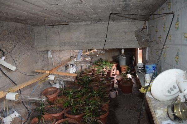 Kırıkkale'de saksıda Hint keneviri ele geçirildi -2