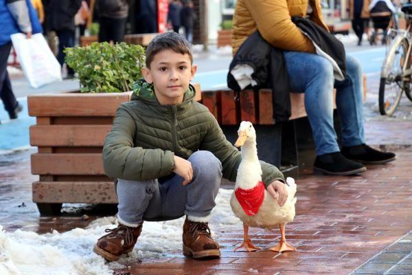 Caddede sahibinin arkasından yürüyen ördek, ilgi odağı oldu -7