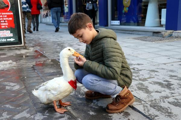 Caddede sahibinin arkasından yürüyen ördek, ilgi odağı oldu -10