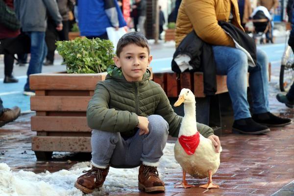 Caddede sahibinin arkasından yürüyen ördek, ilgi odağı oldu -8