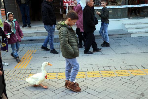 Caddede sahibinin arkasından yürüyen ördek, ilgi odağı oldu -6
