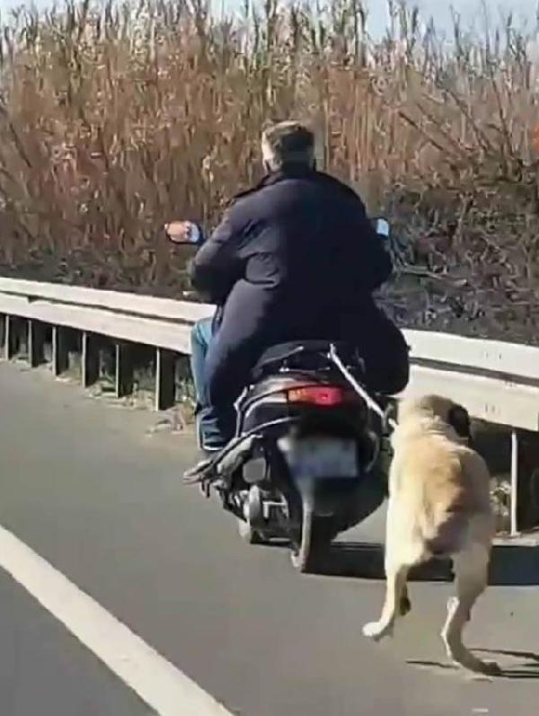 Motosikletle sürüklenen köpek ölmek üzereyken bulundu -1