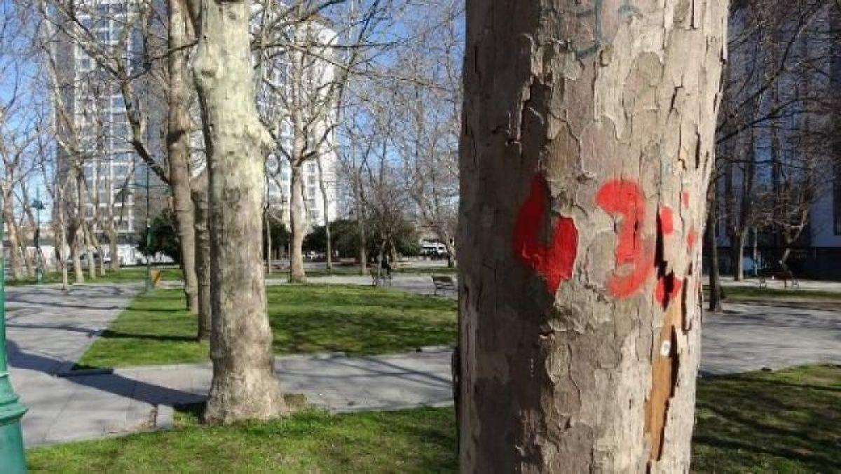 Ek fotoğraflar // Gezi Parkı'na 150 yeni ağaç dikiliyor -5