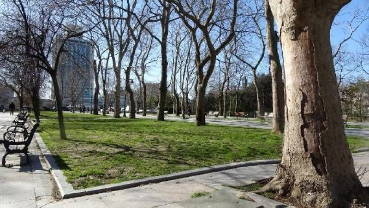 Ek fotoğraflar // Gezi Parkı'na 150 yeni ağaç dikiliyor -9