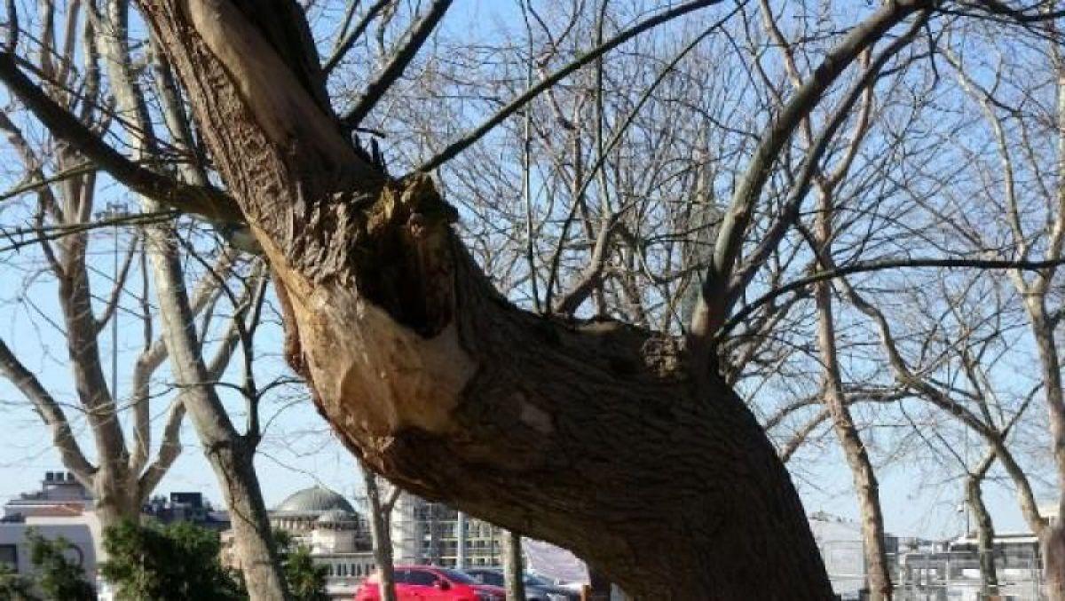 Ek fotoğraflar // Gezi Parkı'na 150 yeni ağaç dikiliyor -1
