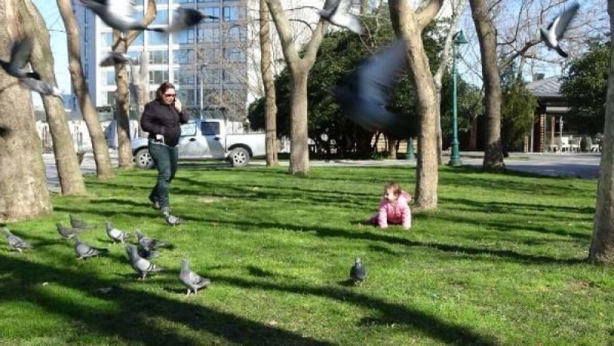 Ek fotoğraflar // Gezi Parkı'na 150 yeni ağaç dikiliyor -7
