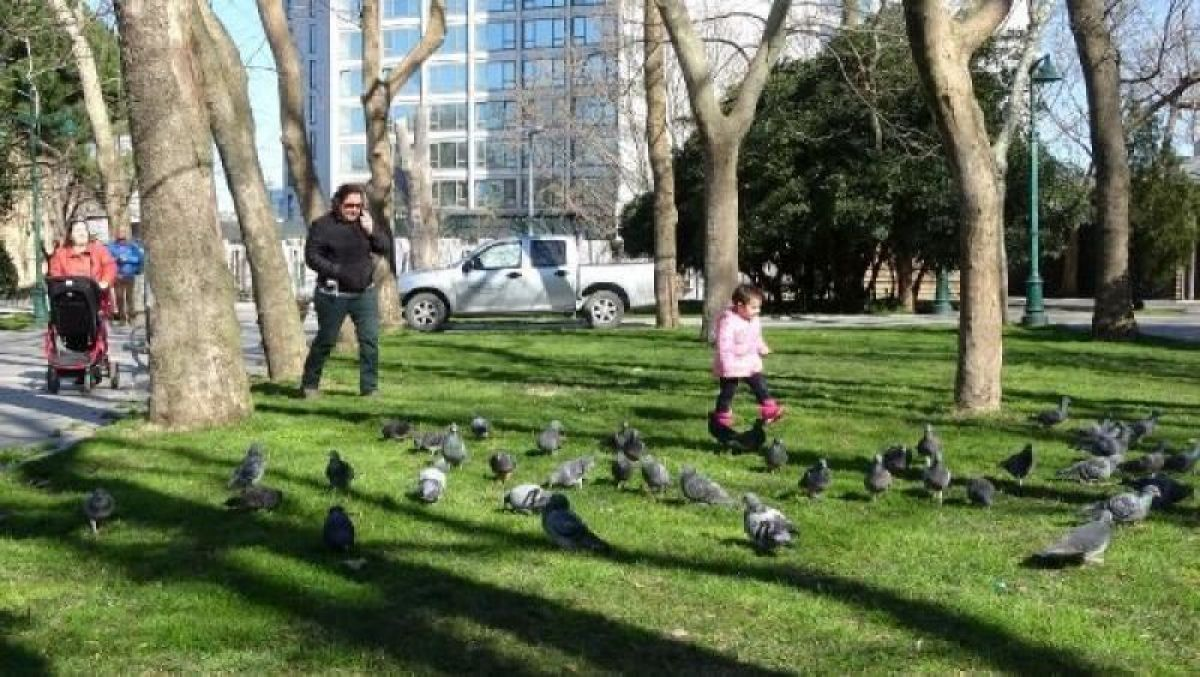 Ek fotoğraflar // Gezi Parkı'na 150 yeni ağaç dikiliyor -6