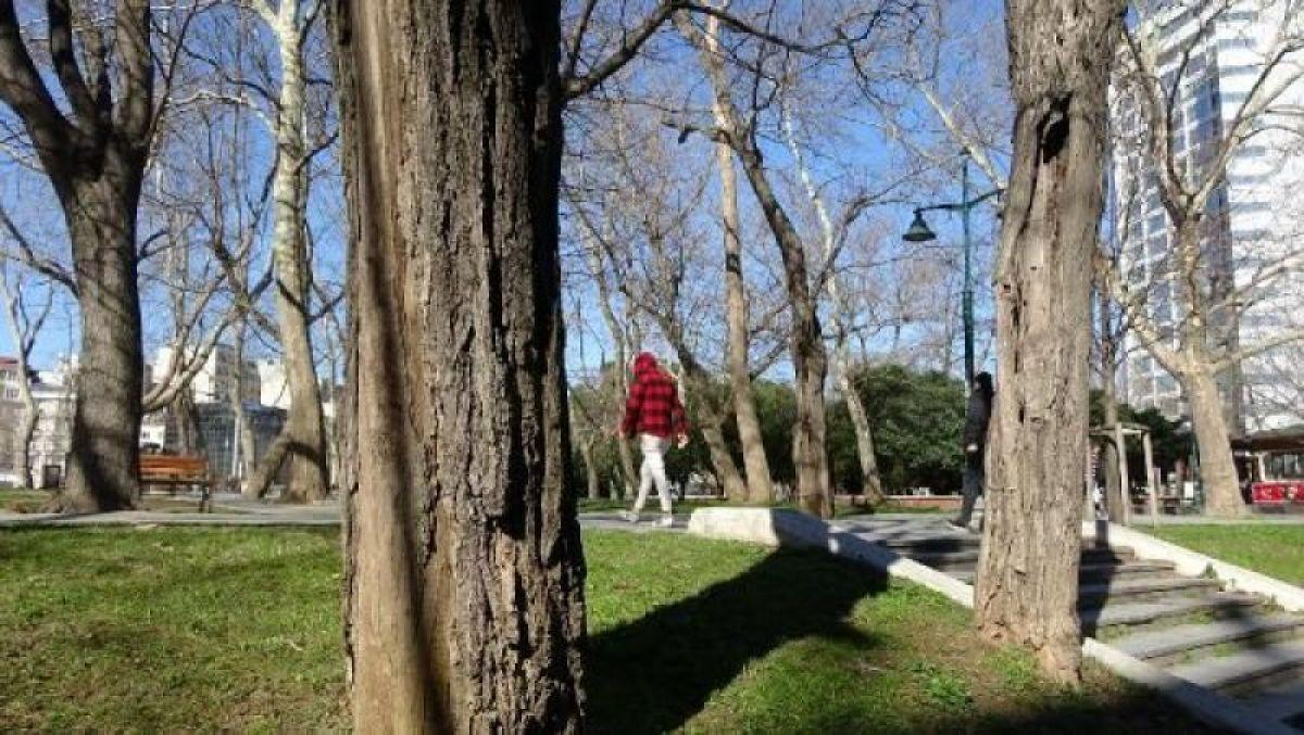 Ek fotoğraflar // Gezi Parkı'na 150 yeni ağaç dikiliyor -10