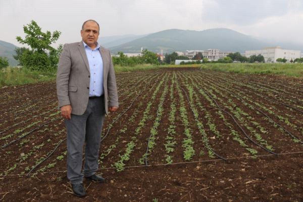 Kenevirde 2 yeni tür tohum üretildi -3
