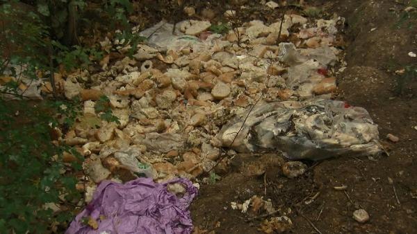 Çekmeköy de 27 köpek ortadan kayboldu #4