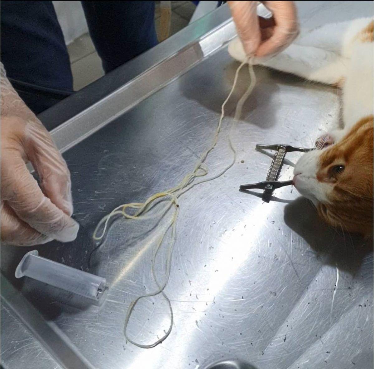 Zonguldak ta 2 metrelik ip yutan kedi, endoskopi ile kurtarıldı #4