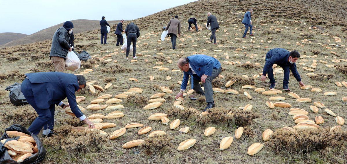 Erzurum da doğaya yine 2001 ekmek bıraktılar #5