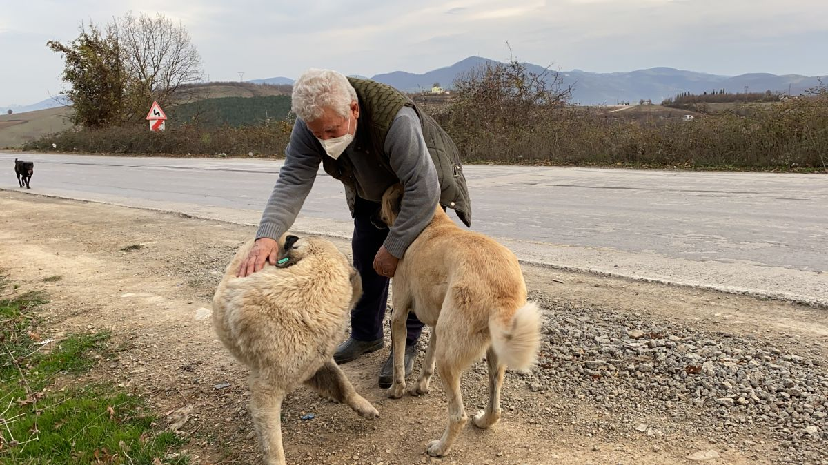 Samsun da sokak hayvanlarını tedavi etmek isteyen Fevzi Uyar, 71 yaşında veteriner oldu #9