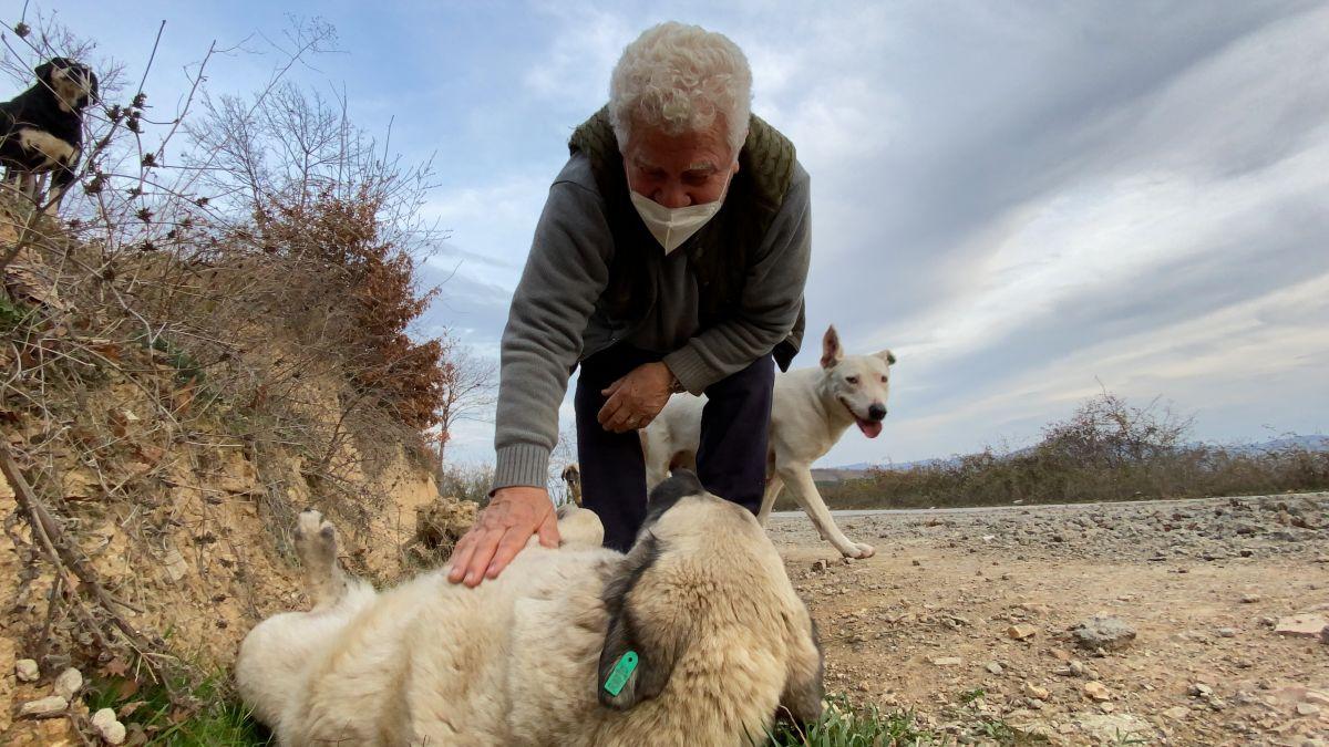 Sokak hayvanlarını tedavi etmek isteyen Fevzi Uyar, 71 yaşında veteriner oldu