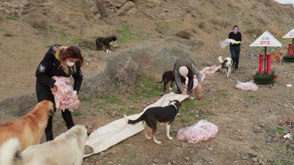 Samsun da sokak hayvanlarını tedavi etmek isteyen Fevzi Uyar, 71 yaşında veteriner oldu #7