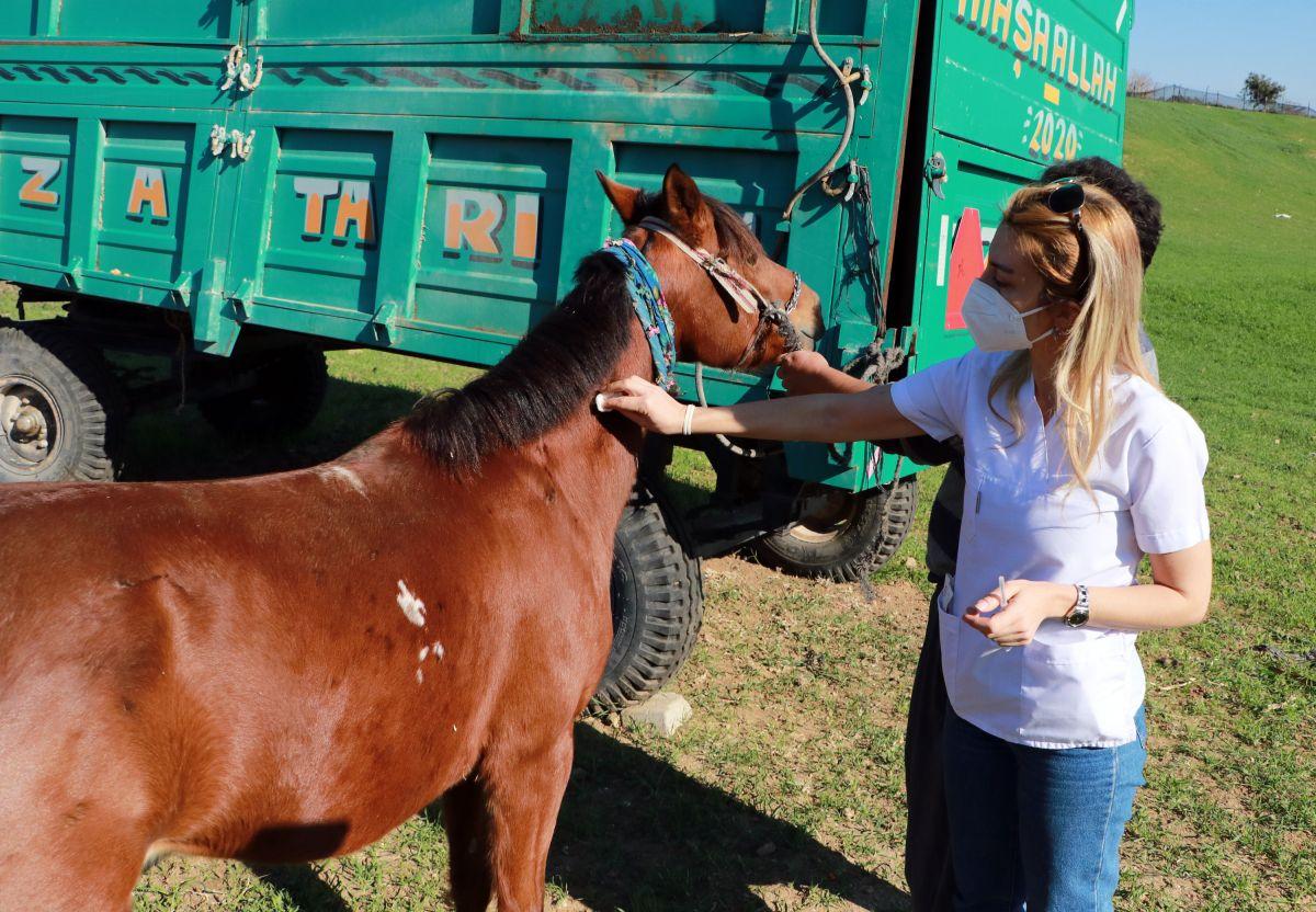 Adana da kaçak kesimler, at, eşek ve katırlara çip takılarak önlenecek #8
