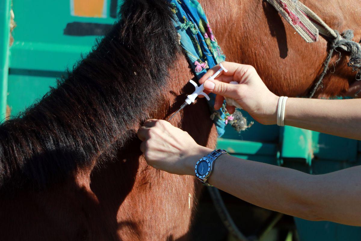 Adana da kaçak kesimler, at, eşek ve katırlara çip takılarak önlenecek #3