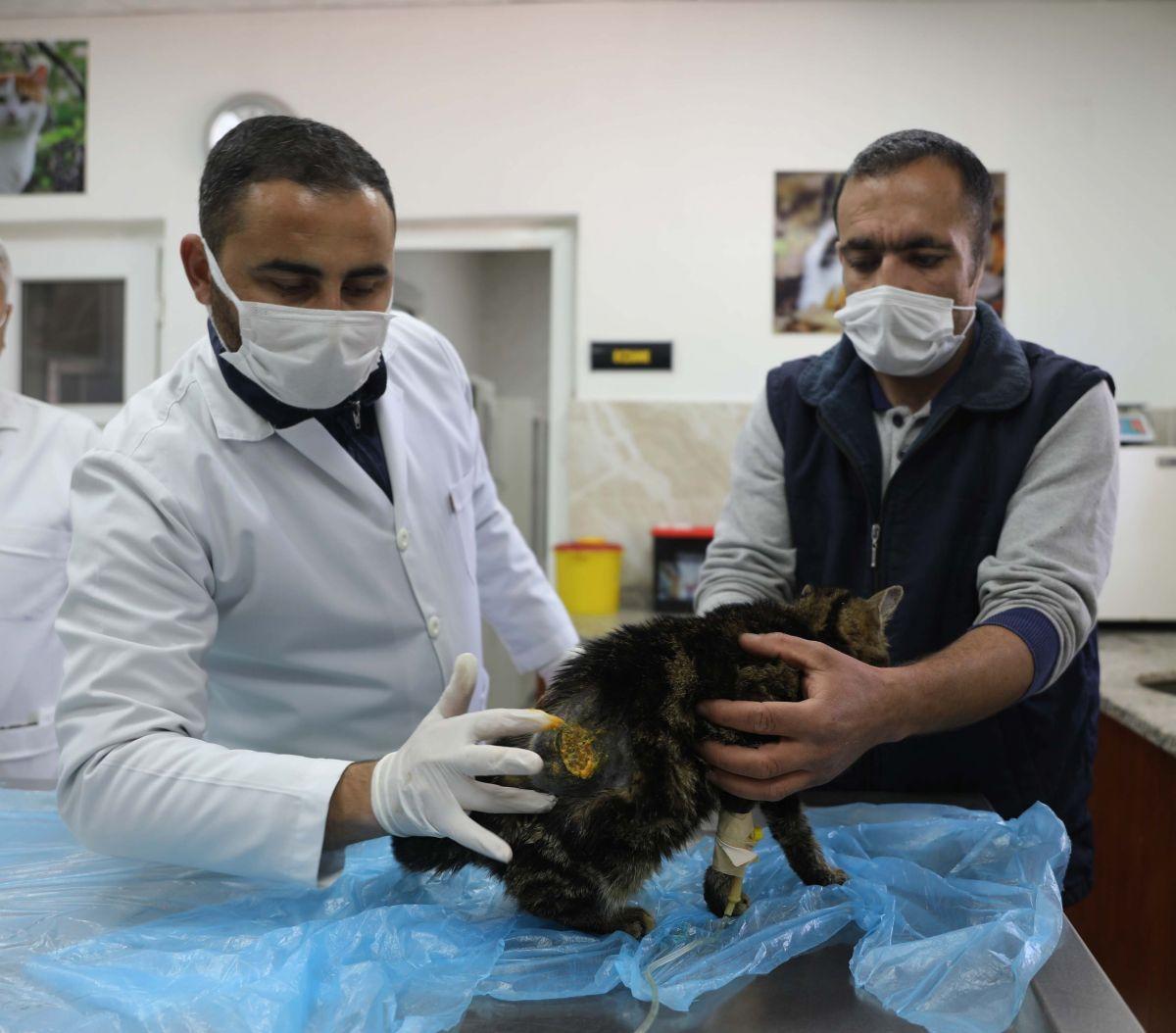 Gaziantep te kediyi çivili sopayla döven şahıs, mama karşılığında affedildi #3