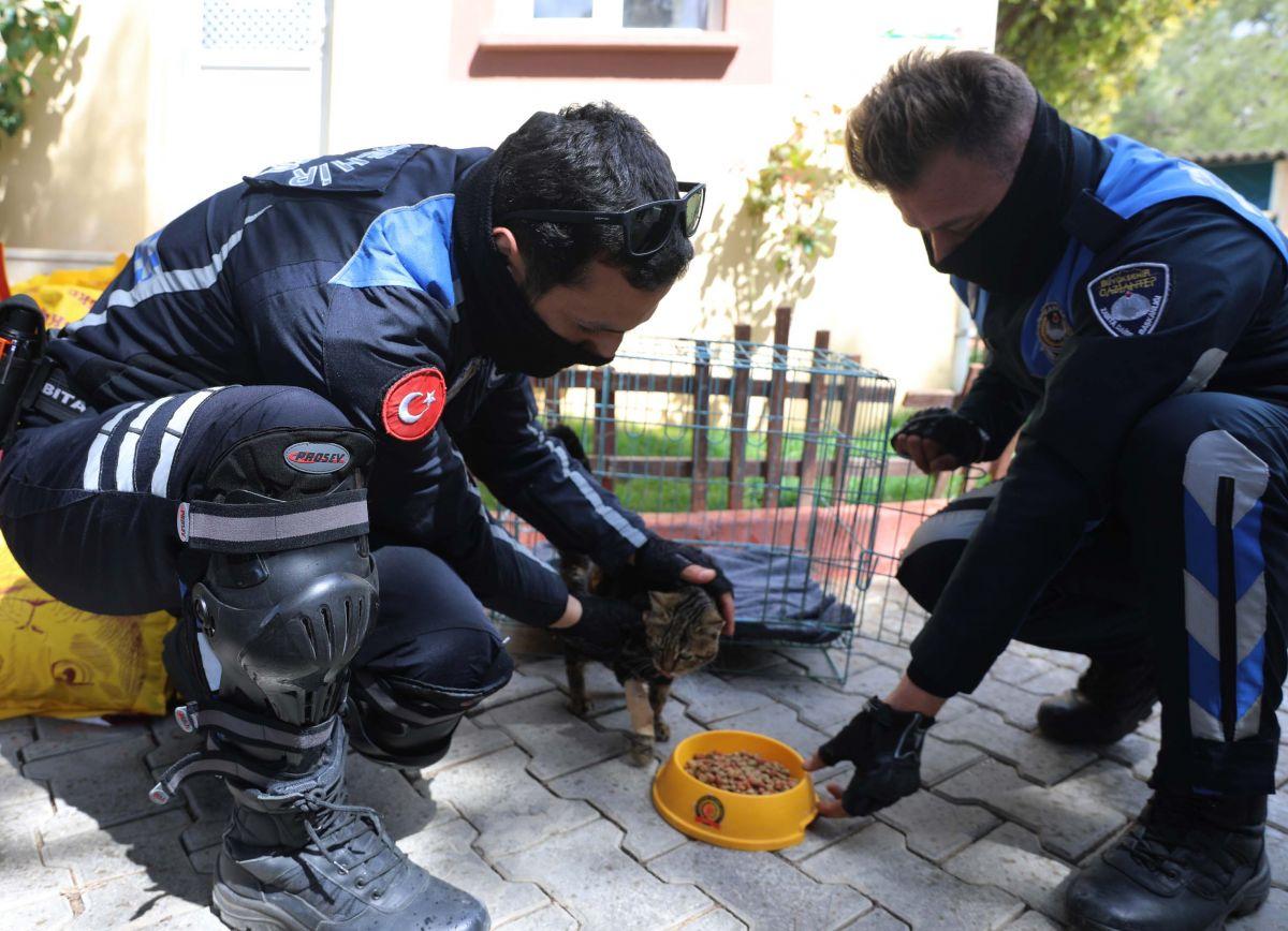 Gaziantep te kediyi çivili sopayla döven şahıs, mama karşılığında affedildi #6
