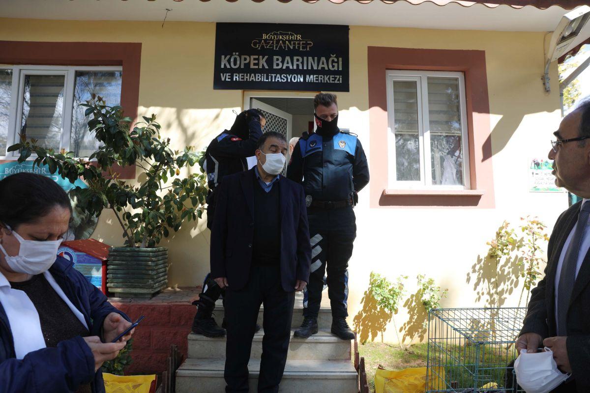 Gaziantep te kediyi çivili sopayla döven şahıs, mama karşılığında affedildi #2