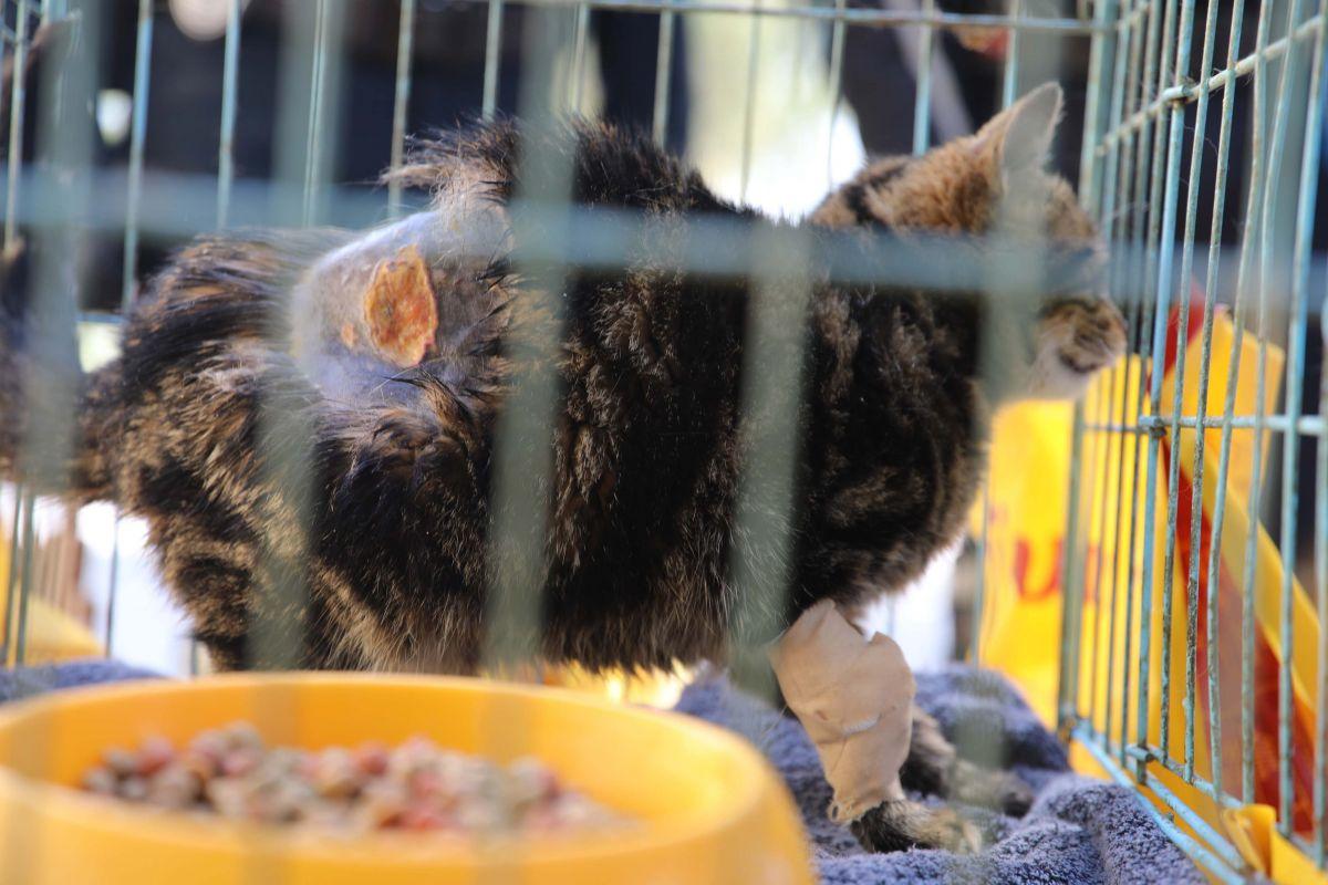 Gaziantep te kediyi çivili sopayla döven şahıs, mama karşılığında affedildi #4