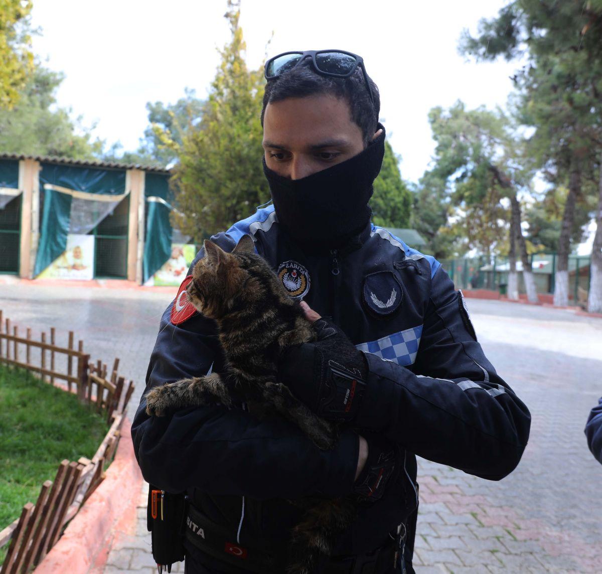 Gaziantep te kediyi çivili sopayla döven şahıs, mama karşılığında affedildi #9