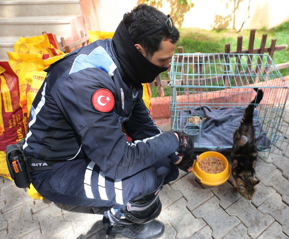 Gaziantep te kediyi çivili sopayla döven şahıs, mama karşılığında affedildi #8