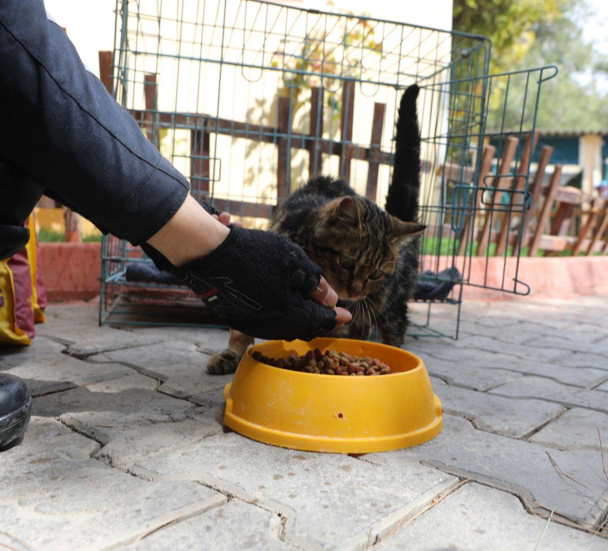 Gaziantep te kediyi çivili sopayla döven şahıs, mama karşılığında affedildi #7