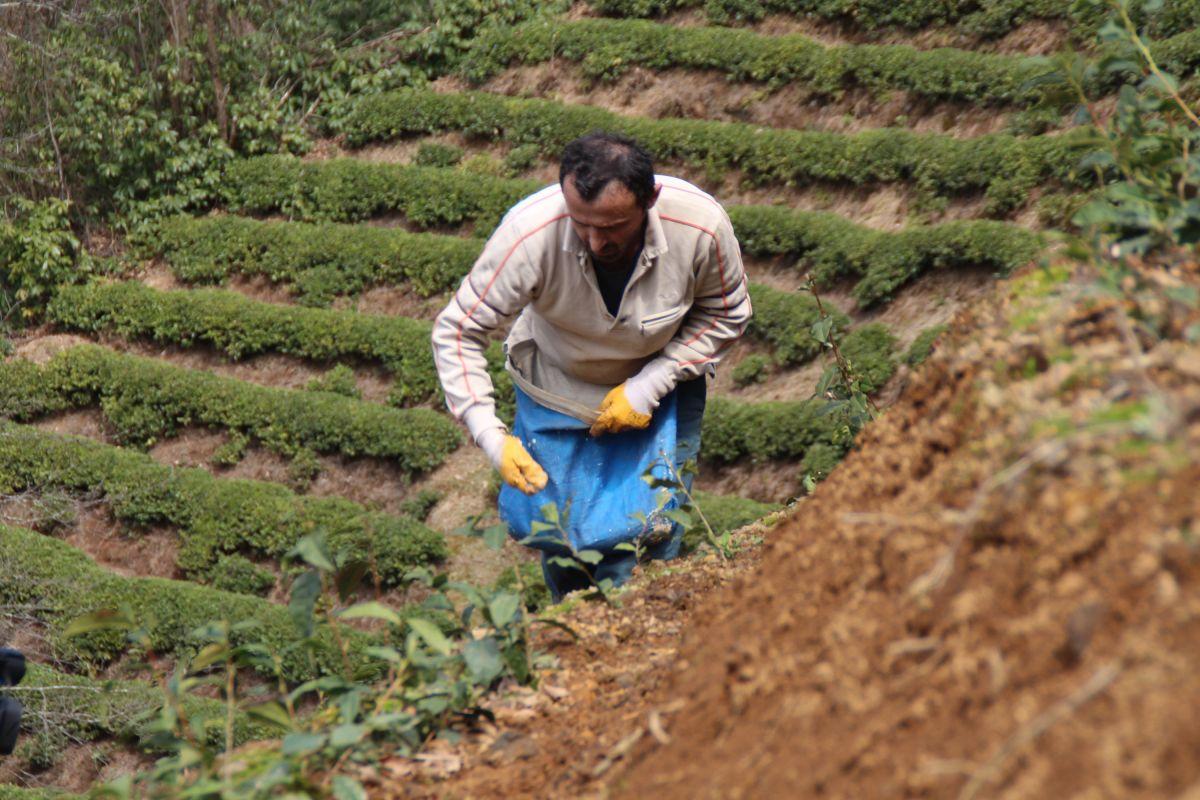 Doğu Karadeniz'de çay üreticilerine kısıtlama muafiyeti #2